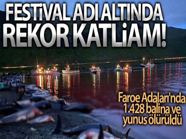 Faroe Adaları'nda 1.428 balina ve yunus öldürüldü