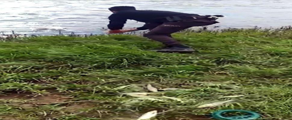 Van polisi, kaçak avlanan inci kefallerini tekrar suya bıraktı