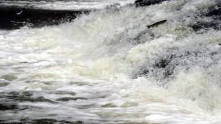 Van'da inci kefalinin tatlı sulara göçü başladı