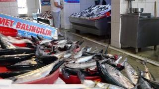 Trabzon'da balık fiyatları