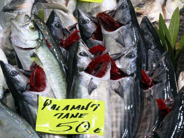 Çanakkale'de son palamutlar tanesi 50 liradan satılıyor