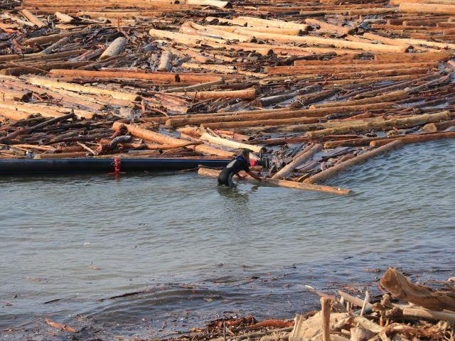 Selin Sürüklediği Tomruklar, Balıkçılığı da Vurdu